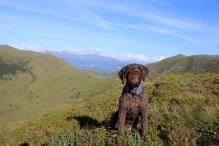 My faithful hiking companion