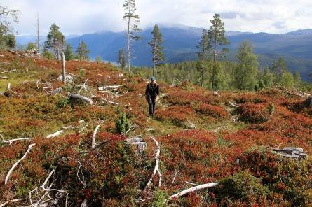 Off-trail to Hønsaholten