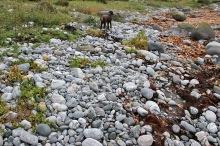 Really round stones...