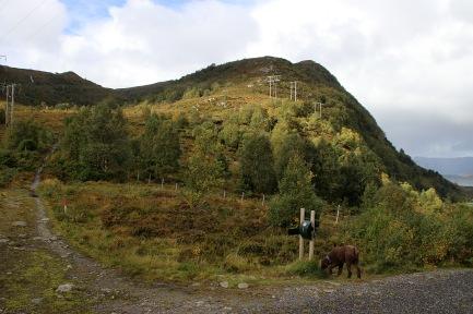 Sandvikhornet above
