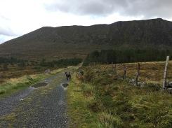 Towards the mountain path
