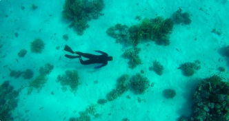 Our guide shows how diving is done