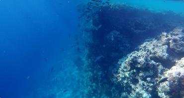 Lots of fish under the floating bridge