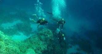Divers (II)