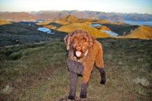 My little hiking companion