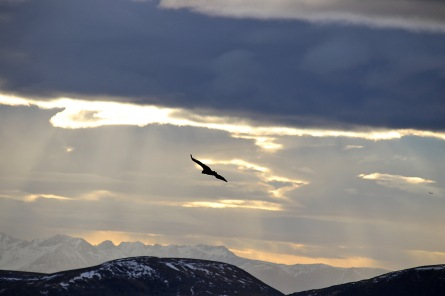 Lots of eagles above us. Here's one of them