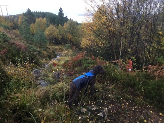 Trail work!