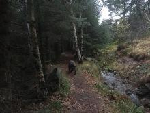 Neat path!
