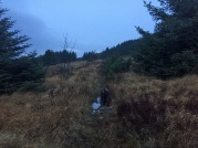 Towards Bugardsmyrane
