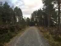 Along this forest road