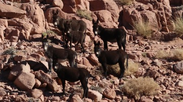 Donkey patrol