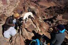 On the north top. The dog gets water