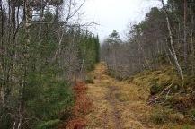In Norddalen