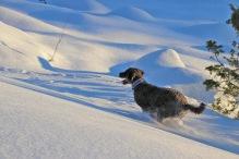 Big fun in the snow!