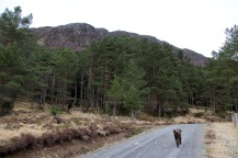 Up the forest road