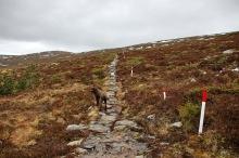 On the mountain path