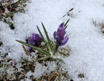 Spring?