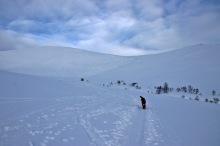 Nice tracks up the mountain