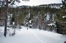 Approaching the steep part of the forest