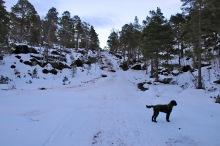 Following the Cat Ski track