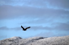 A passing eagle
