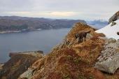 A nice ledge took us to the Sandfjellet ridge