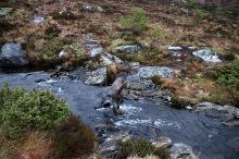 Karma has always elegant creek and river crossings