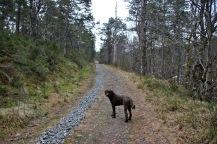 Up the road to Langevatnet
