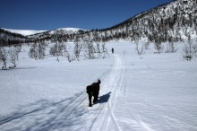 A transport leg in Slettedalen