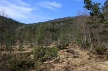 On the Kvamsstølen path