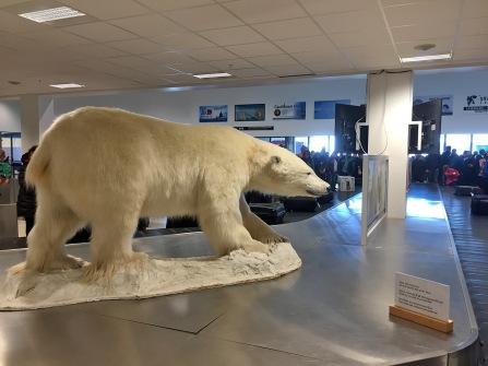 Where else than on Svalbard...