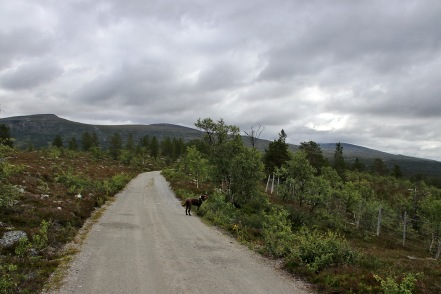 On the road to Øya