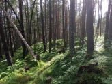 Down the forest