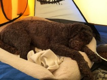 Back in the tent