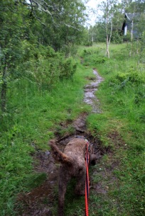 Wet path in the beginning