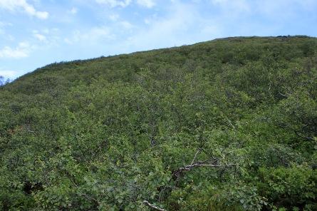 Descending Bolfjellet