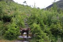 Into Osdalen
