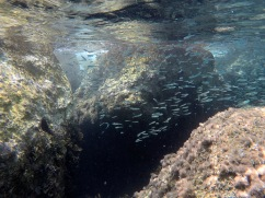 A cool, small shoal of fish