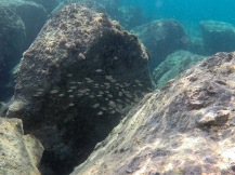 Small shoals, all around