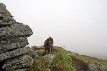 Seeking shelter behind the cairn