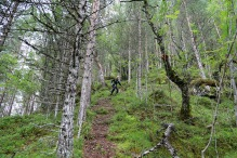 A steep forest section