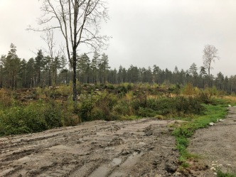 The Stikkaåsen forest