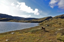 Along Kvilsteinsvatnet